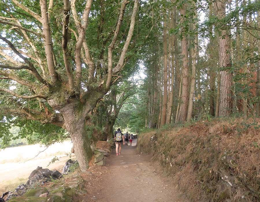 immagine di pellegrini in cammino nel bosco della galizia